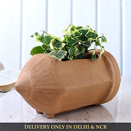 English Ivy Plant In Pencil Shaped Terracotta Pot