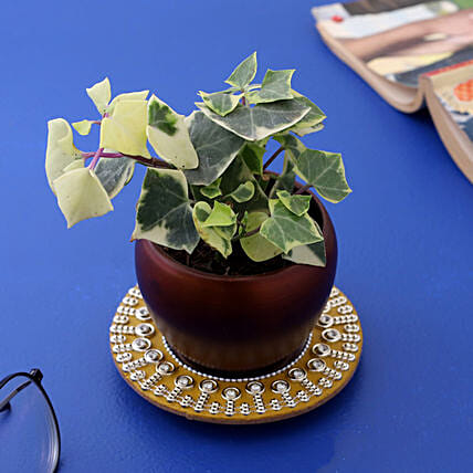 English Ivy Plant In Teak Pot And Beautiful Mirror Plate