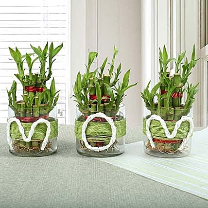 3 Layer Bamboo Plant for Mother