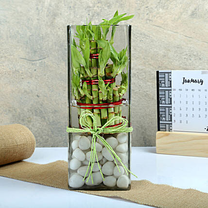 Three layer bamboo put in a large round glass vase with white pebbles:Exotic Plants