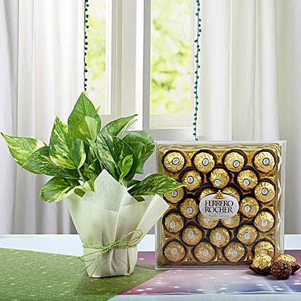Combo of Money Plant and Chocolates:Ferrero Rocher Chocolates