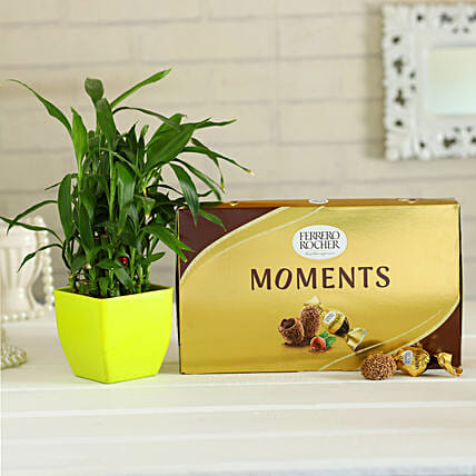chocolate with lucky plant online