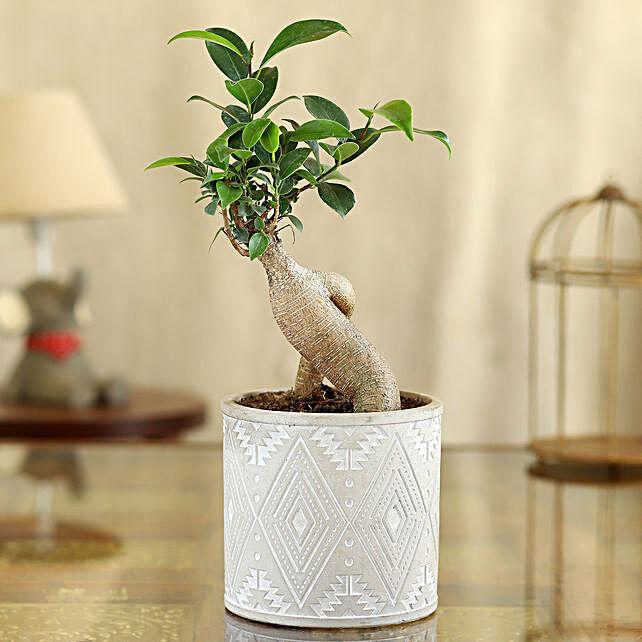 Ficus Bonsai Plant In Ivory Pipe Shape Pot:Folk Art-planters
