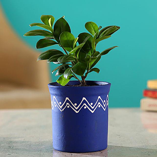 Ficus Compacta Plant In Blue Handmade Terracotta Pot:Terracotta Planters