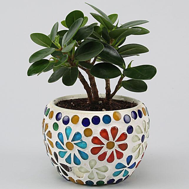 Online Ficus Compacta Plant In Floral Mosaic Design Pot:Plants Delivery