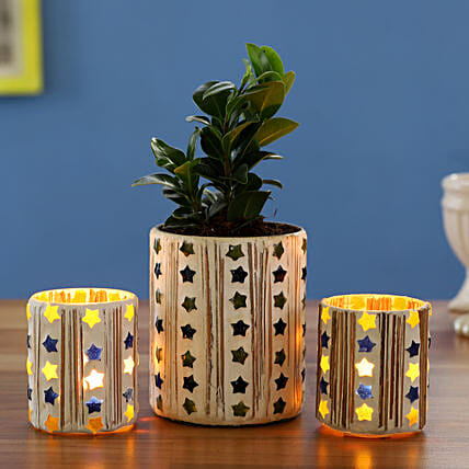 Ficus Compacta Plant In Mosaic Vase With Mosaic Votives