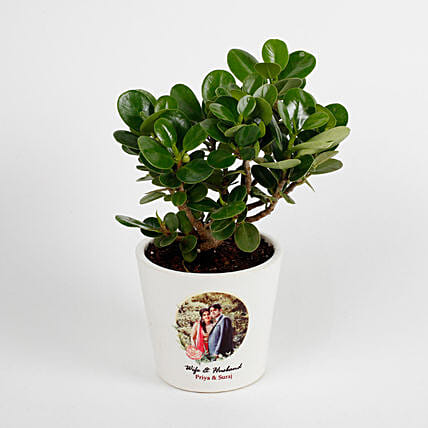 Ficus Dwarf Plant in White Personalised Ceramic Pot