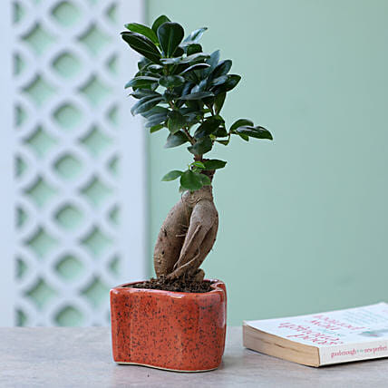 Online Ficus Plant In Heart shaped Pot:Ceramic Planters