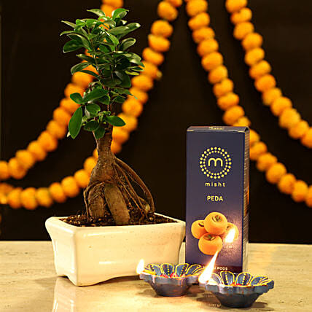 Online Ficus Microcarpa Festive Combo