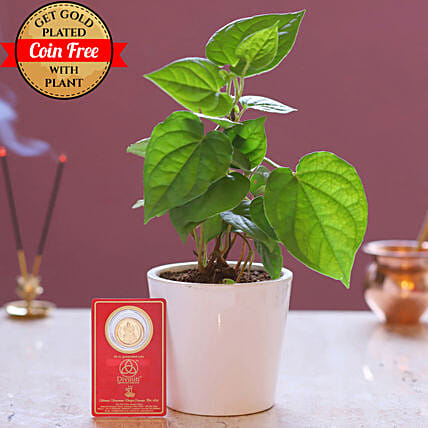 Free Gold Plated Coin With Betel Plant Combo