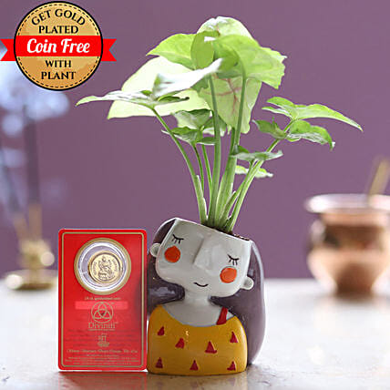 Free Gold Plated Coin With Syngonium Plant Combo