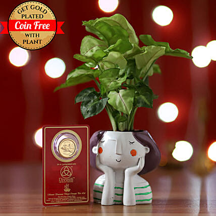 Online Syngonium Plant And Coin:Gifts to Bijapur