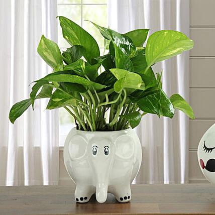 Money plant in an elephant shaped ceramic vase:Foliage Plants