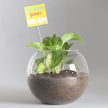 Friends Forever Money Plant Terrarium