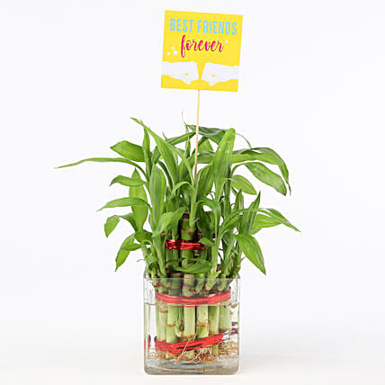 Friends Forever Two Layer Bamboo Plant:Happy Friendship Day Gift