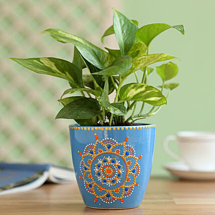 golden money plant with handpainted planter online