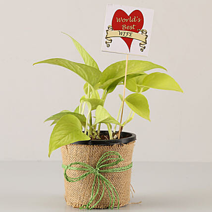 golden money plant for wife on karwa chauth