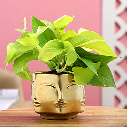 Golden Money Plant In Face Embossed Ceramic Pot