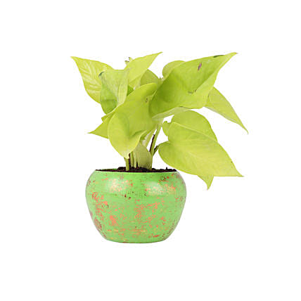 Colourful Pot Plant for Office