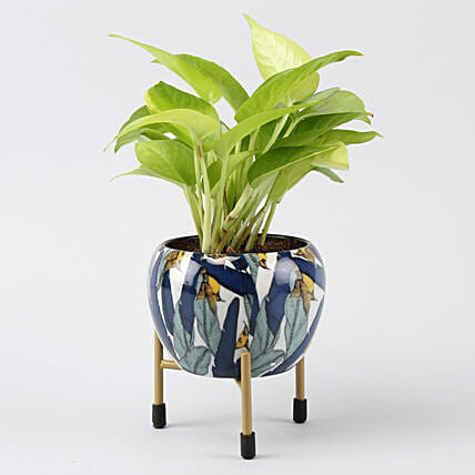 Online Golden Money Plant In Leaf Printed Metal Pot
