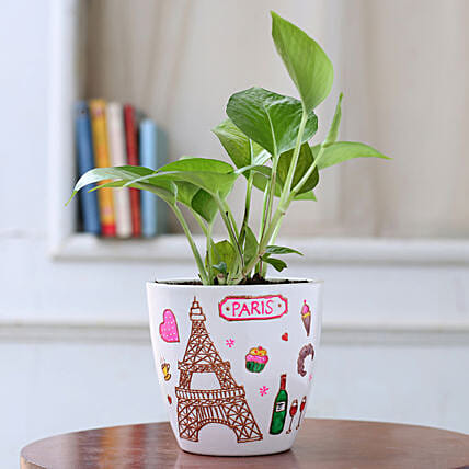 Golden Money Plant in White Paris Planter