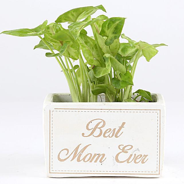 green leaf plant in concrete pot