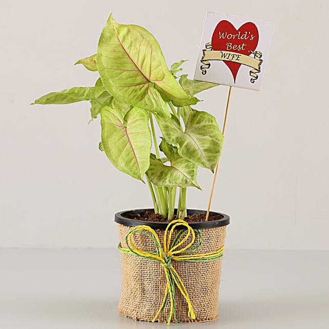 online plant for karwa chauth