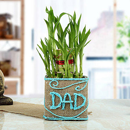 Eco Friendly Green Gift for Dad:Exotic Plants