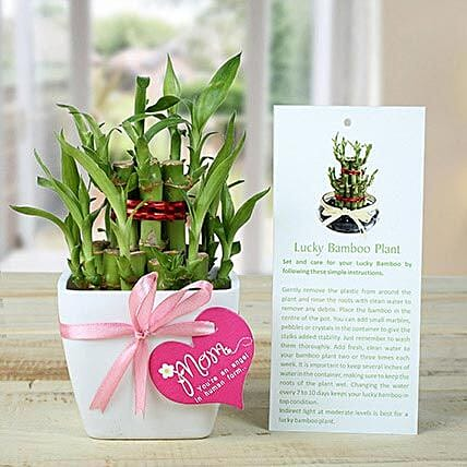 Good Luck Mom-2 layer bamboo in white pot:Send Lucky Bamboo to Delhi