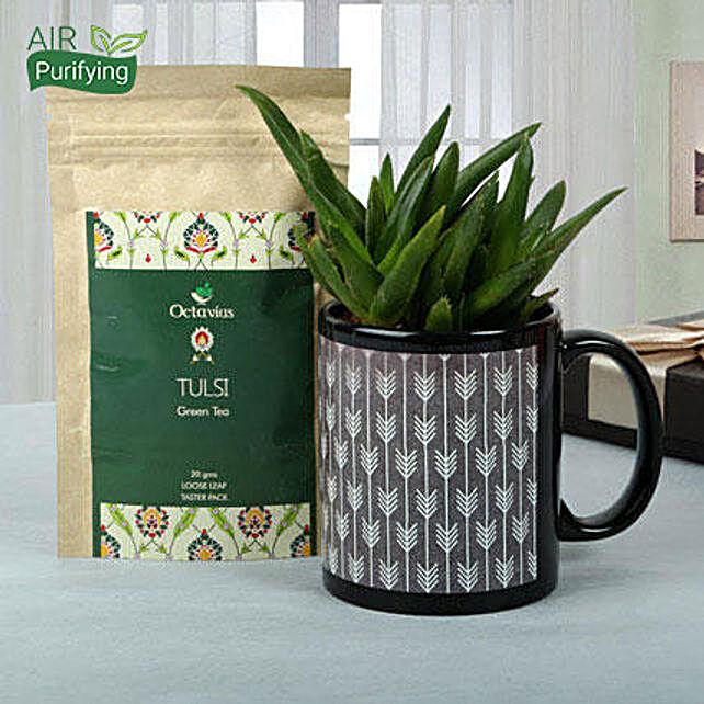 A gift set of aloe vera plant in a printed black ceramic mug and octavious tulsi green tea