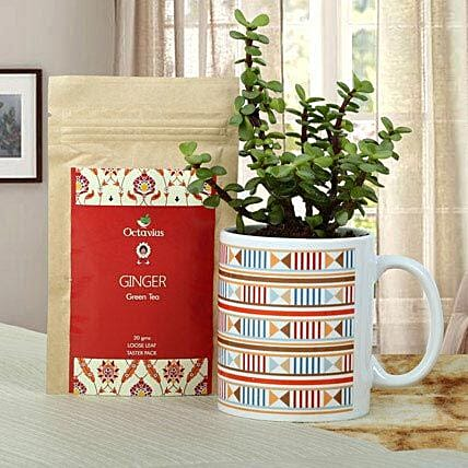 A gift set of jade plant in a printed white ceramic mug and octavious ginger green tea