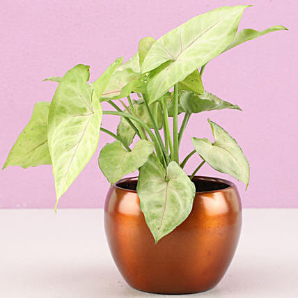 online plant for him:Metal Planters