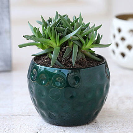 Online Plant In Green Metal Pot