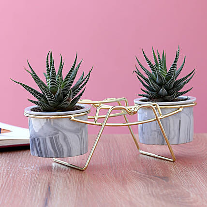 Haworthia Plant Duo In Ceramic Pots With Golden Stand:Planter Stands