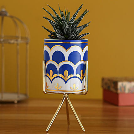 Haworthia Plant In Ceramic Pot With Golden Stand