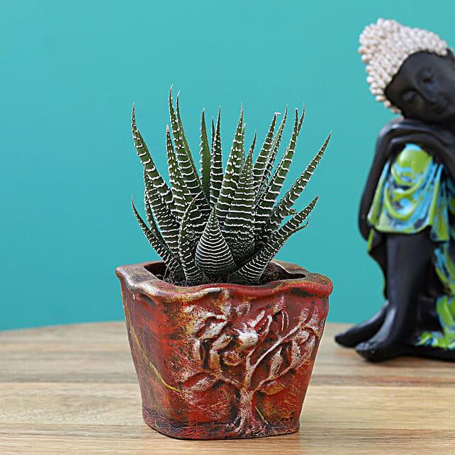 online haworthia plant in resin pot