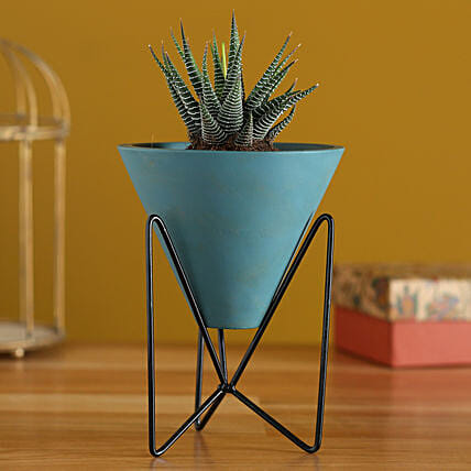 Haworthia Plant In Triangular Pot With Stand