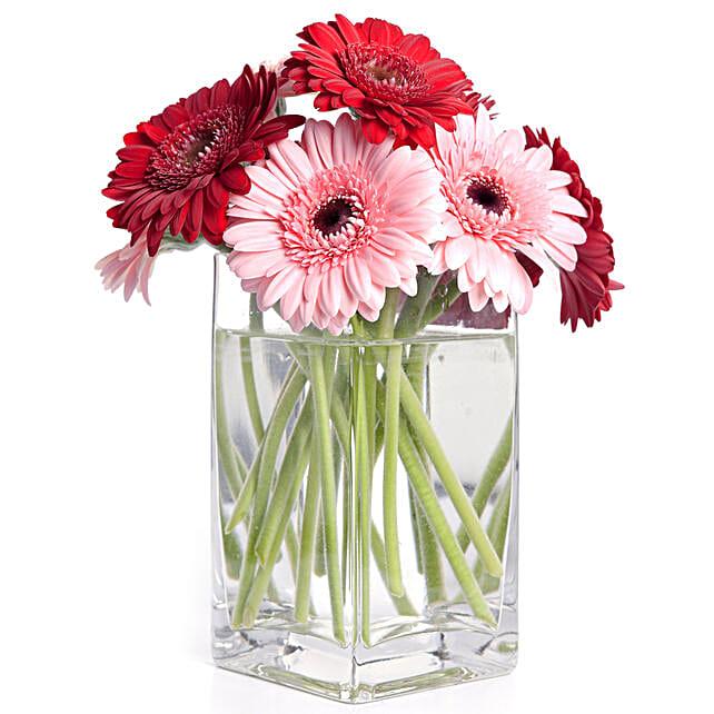 Hearty Gerbera Blossoms Vase