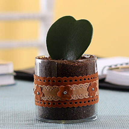 Mini Plant with Pot Online
