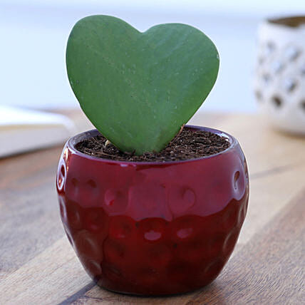Online Hoya Plant In  Red Hammered Metal Pot