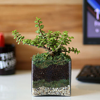 plant in glass vase:Terrariums Plants
