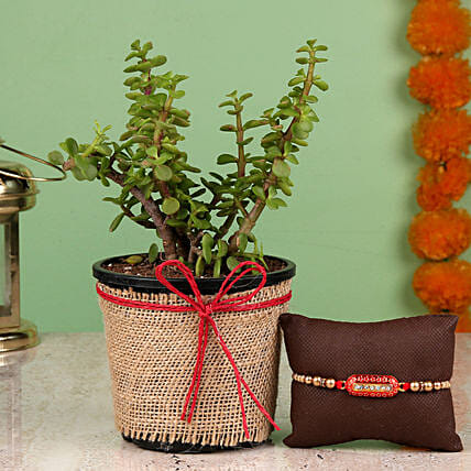 online Jade Plant & Capsule Rakhi:Same Day Rakhi Delivery in India