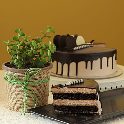 Online Jade Plant With Eggless  Cake:Boss day Gifts