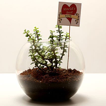 jade plant for wife on karwa chauth