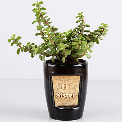 Online Jade Plant For Sister