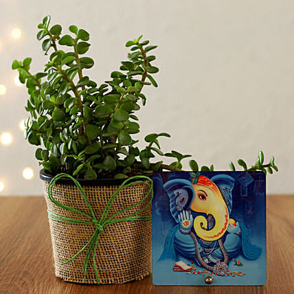 goodluck plant for diwali online:Table tops