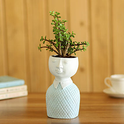 Jade Plant In Designer Planter