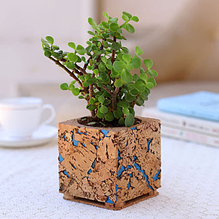 Plant in Beautiful Cork Planter