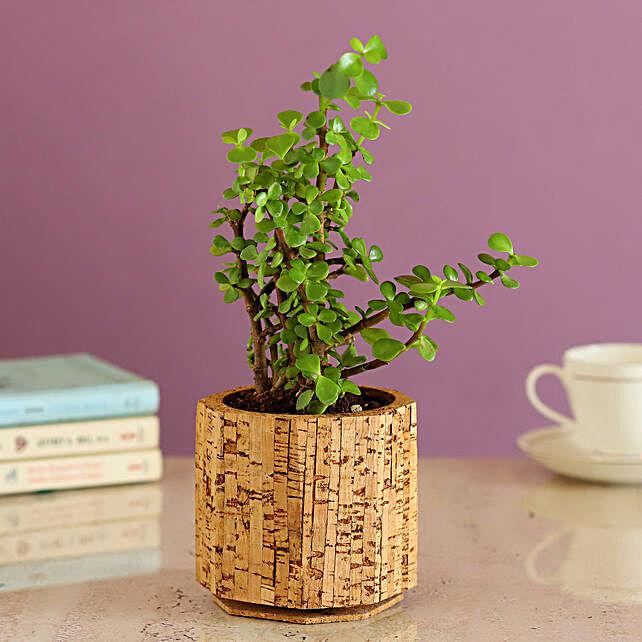 Jade Plant In Beige Cork Pot Online