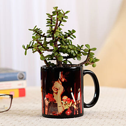 indoor plant in black photo mug